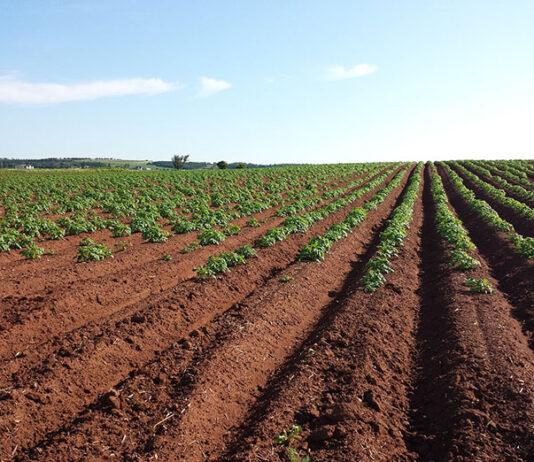 Znaczenie zwalczania szkodników w sadownictwie